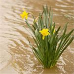 Tips for Repairing Your Garden after a Flood....