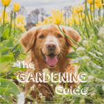 Create a Dog Friendly Garden