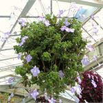 Hanging Basket Step-by-Step Video Tutorial