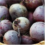 Get to Know Beetroot! - The Gardening Guide - July 2014