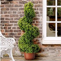 Pack of 2 Gardman 135cm Swirl Topiary Tree